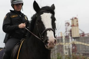 Murphy the Police Horse